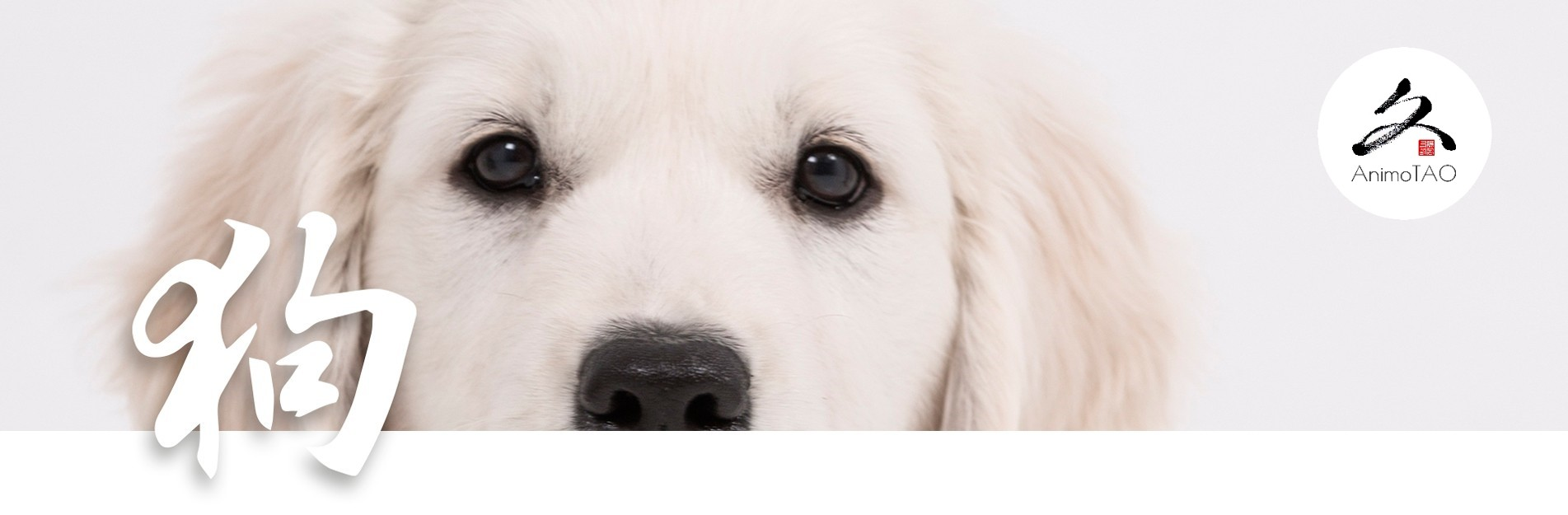 Natural food supplements for dogs