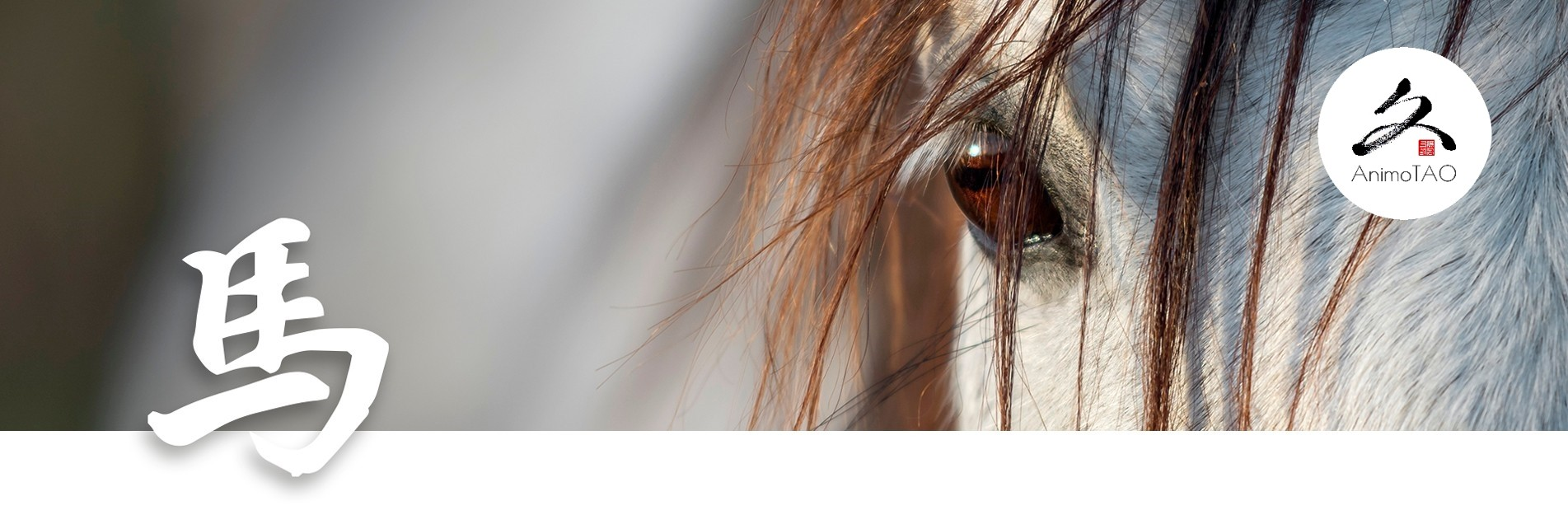 Natural food supplement for horses
